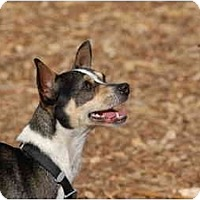 Adopt A Pet :: Buster - Ft. Myers, FL