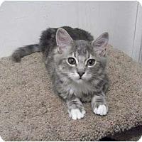 Adopt A Pet :: Rafiki - Modesto, CA