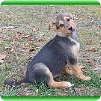 Adopt A Pet :: Yasmin - Staunton, VA