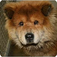 Adopt A Pet :: Smokey-ADOPTED - kennebunkport, ME