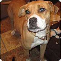 Adopt A Pet :: Lizzy fully vetted $75 - Copperas Cove, TX