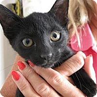 Adopt A Pet :: Eenie - Ft. Lauderdale, FL