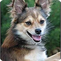Adopt A Pet :: Pending Adoption!!! Rum - Houston, TX