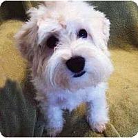 Adopt A Pet :: Spice - La Costa, CA