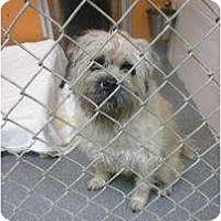 Adopt A Pet :: Ringo - Douglas, MA