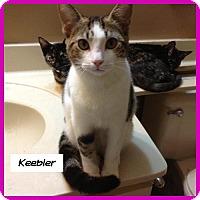 Adopt A Pet :: Keebler - Miami, FL