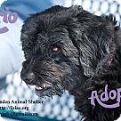 Adopt A Pet :: MARIO-URGENT FOSTER NEEDED