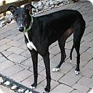 Adopt A Pet :: Bijou