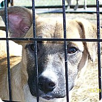 Adopt A Pet :: Rachel - Mexia, TX