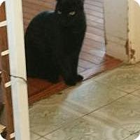 Adopt A Pet :: Sophie *URGENT* - Berkeley Hts, NJ