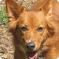 Adopt A Pet :: Autumn - Allentown, PA