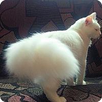 Adopt A Pet :: Nimbus - McDonough, GA