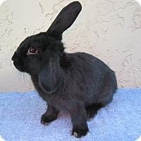 Adopt A Pet :: Cassy - Bonita, CA
