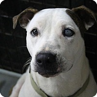 Adopt A Pet :: Libby - Franklin, TN