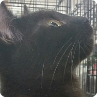 Adopt A Pet :: Truffles - Harrisburg, NC