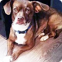 Adopt A Pet :: Veronica - San Diego, CA