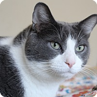 Adopt A Pet :: Smokey - Lincoln, NE