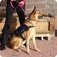 Adopt A Pet :: Jack - Hamilton, MT