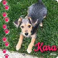 Adopt A Pet :: Kara~~ADOPTION PENDING - Sharonville, OH
