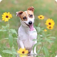 Adopt A Pet :: Stoney - Conyers, GA