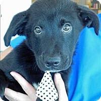 Adopt A Pet :: Froggy - Topeka, KS