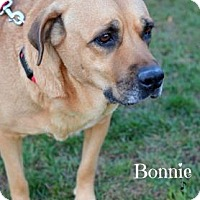 Adopt A Pet :: Bonnie - Niagara Falls, NY