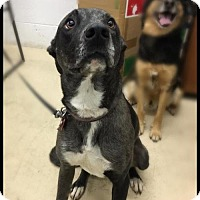 Adopt A Pet :: Piper - Akron, OH