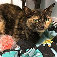 Adopt A Pet :: Lydia - Byron Center, MI
