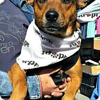 Adopt A Pet :: Vanity - Bradenton, FL