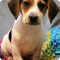 Adopt A Pet :: Lancelot - Southington, CT