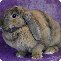 Adopt A Pet :: Ginger - Wilmington, NC