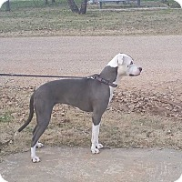 Adopt A Pet :: Tinkerbell - San Angelo, TX
