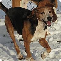Adopt A Pet :: Rascal - Windsor, VA