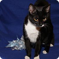 Adopt A Pet :: Ariel (Spayed) - Marietta, OH