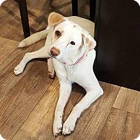 Adopt A Pet :: Momma - waterbury, CT