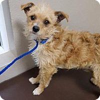 Adopt A Pet :: Keno - Las Vegas, NV