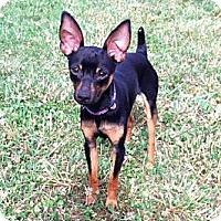 Adopt A Pet :: Skyler - Nashville, TN