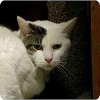 Adopt A Pet :: Gizmo - Lombard, IL
