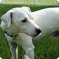 Adopt A Pet :: Mason in Austin - San Antonio, TX