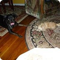 Adopt A Pet :: **Poochie** - Rockaway, NJ