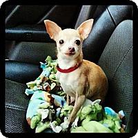 Adopt A Pet :: Tink - Hubertus, WI