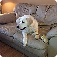 Adopt A Pet :: Callie - Kingwood, TX