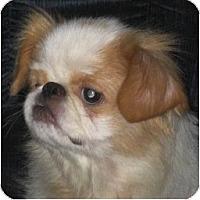 Adopt A Pet :: Cameron-NJ - Mays Landing, NJ