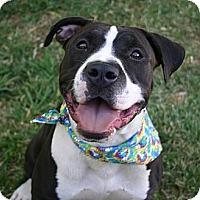 Adopt A Pet :: Petunia-$100 ADOPTION GRANT - Auburn, CA