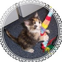 Adopt A Pet :: Sweet Pea! - South Plainfield, NJ