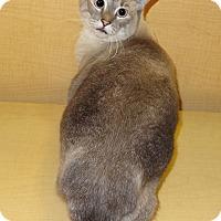 Adopt A Pet :: Princess Leia - Bentonville, AR
