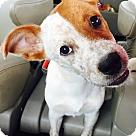 Adopt A Pet :: Bingo