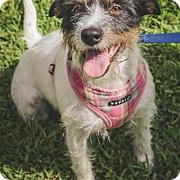 Adopt A Pet :: Mia - Conyers, GA