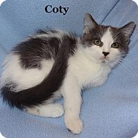 Adopt A Pet :: Coty - Bentonville, AR
