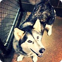 Adopt A Pet :: Jada - Alpharetta, GA